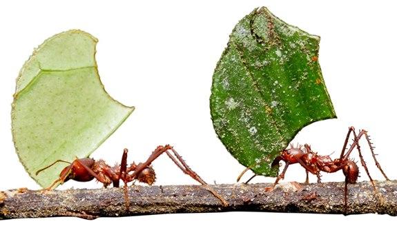 Karınca – K Hayvan İsimleri