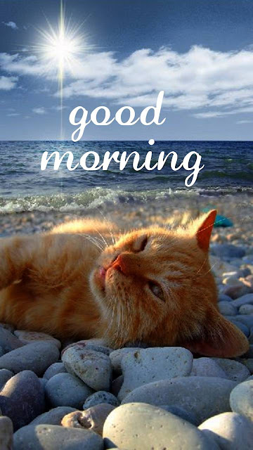 Best Images of Good Morning