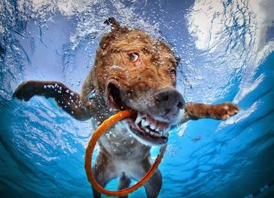 osmjeh psa