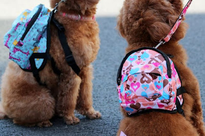 Top 5 Cute Accessories for Dogs That You'd Love