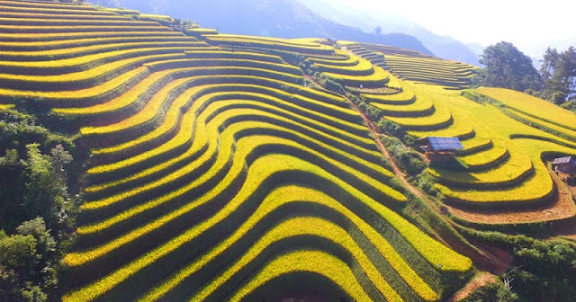 5 Great Homestay For 'Hunting' Ripe Rice In Mu Cang Chai 2