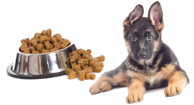 dog food for a German shepherd