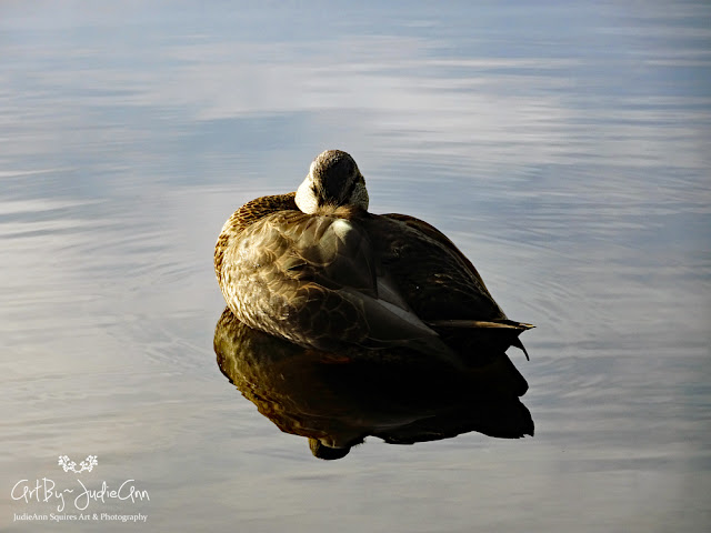 Beautiful Duck Resting On Water