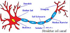 Pengertian dan Klasifikasi Sistem Saraf