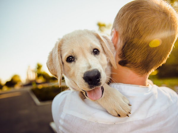 Benefits of Treating Your Puppy in a Natural Way