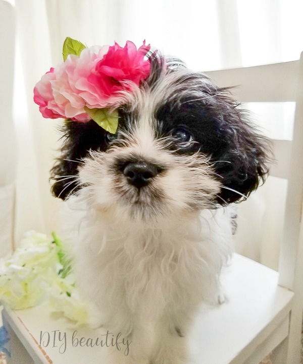 puppy wearing flower crown