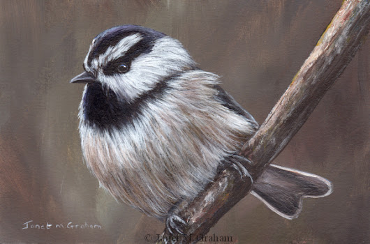 Mountain Chickadee No 2 in acrylics