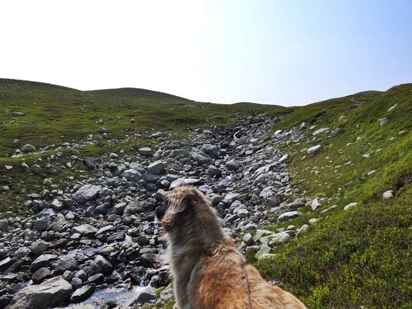 norefjell leonberger