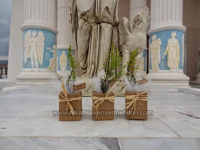 Derya Uğur nikah çamı İzmir Selcuk