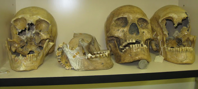 Giant Skulls discovered!