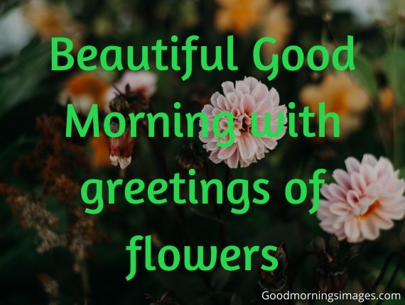 Good morning quotes for whatsapp free download