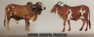 దేశియ గోమాత జాతులు - Holy Indian Cows