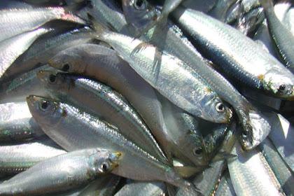 Ikan Tamban Salai Masak Asam