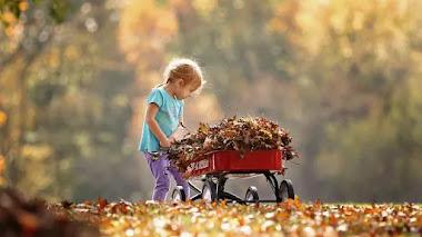 Hojas de otoño: usos en el jardín y herramientas que podemos necesitar
