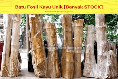batu fosil bambu unik