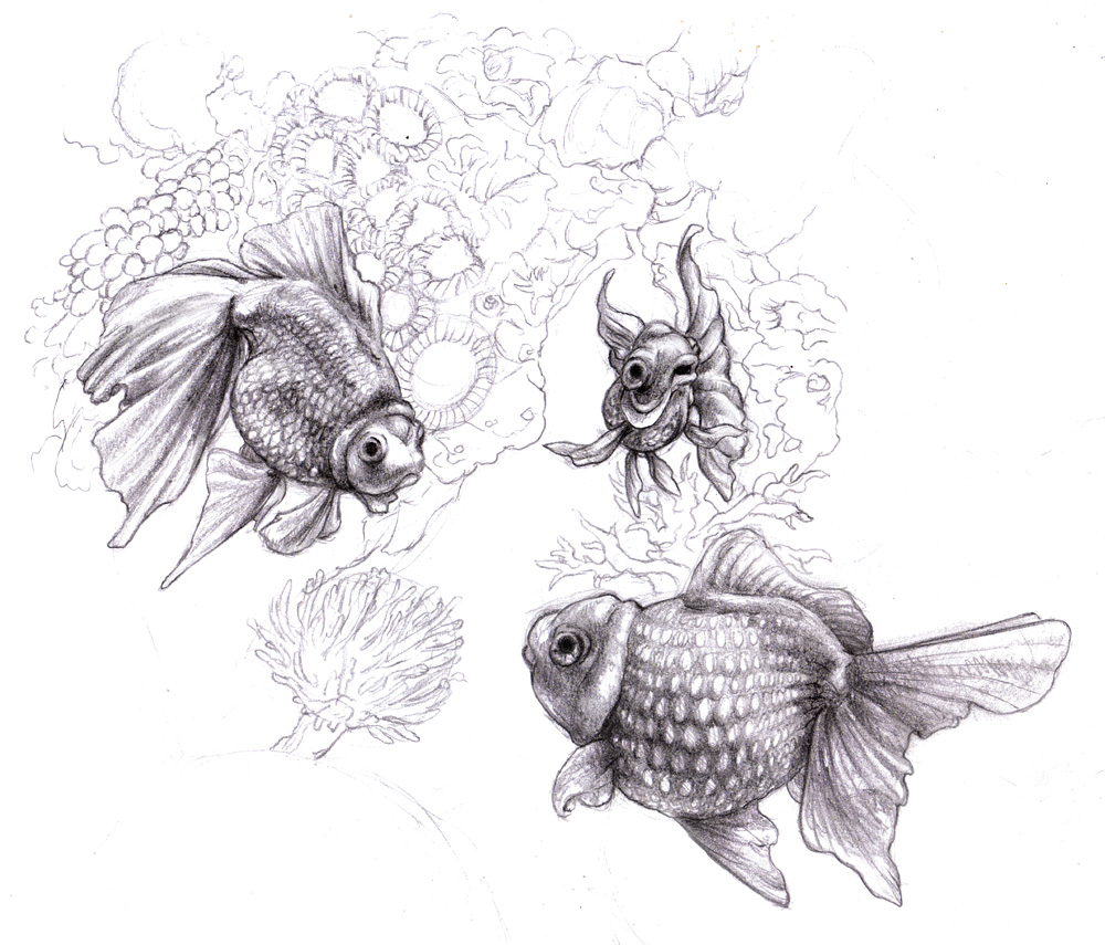 How To Draw Coral Reef Fish