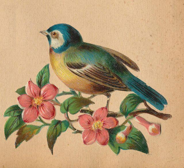 Bird Vintage 52