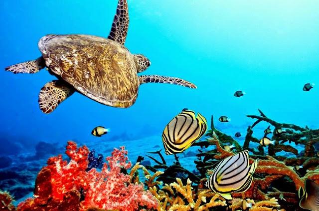 Biota Laut Adalah
