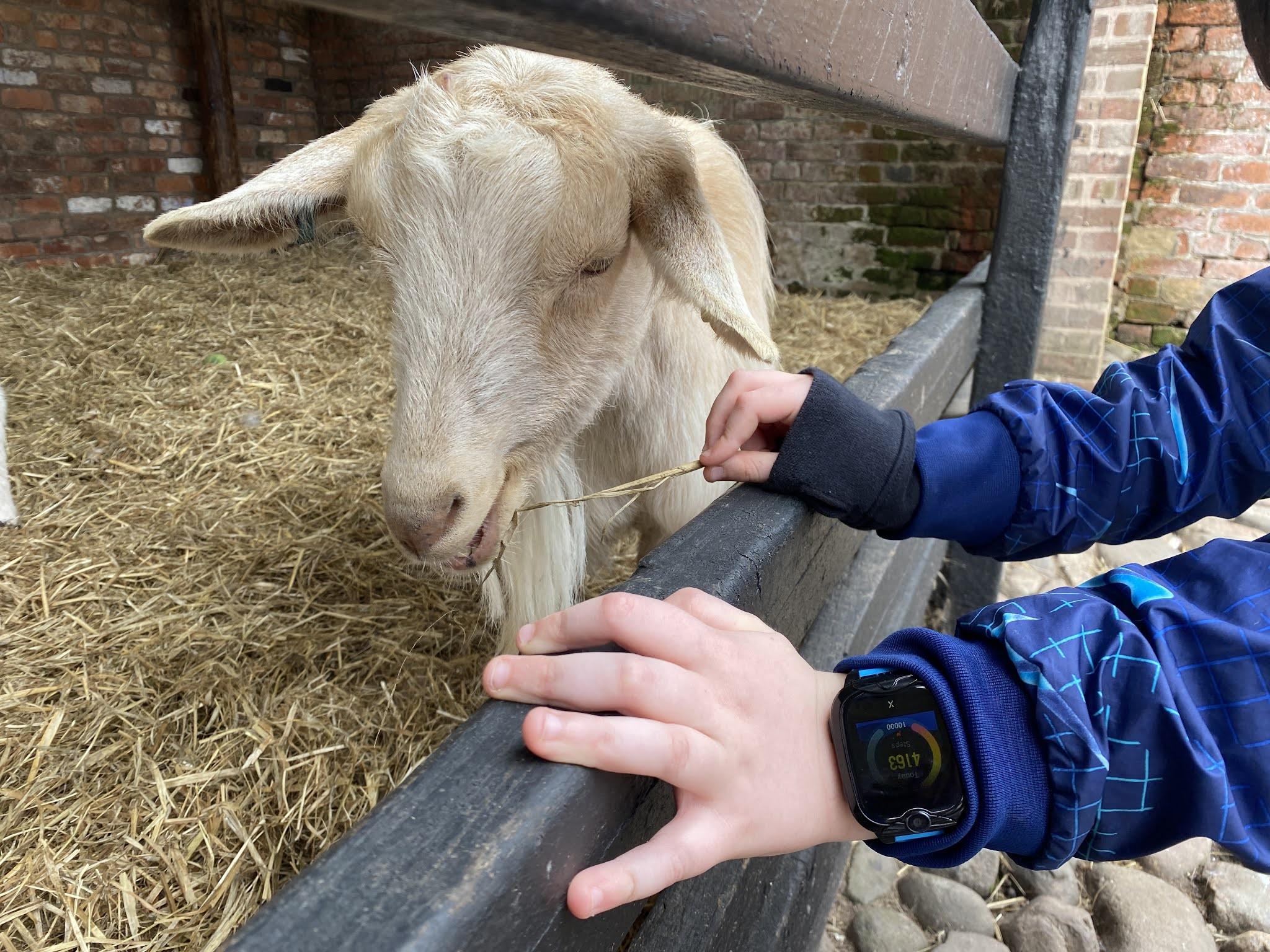 boy stroking a goat