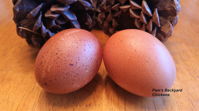 Do eggs with different colored shells taste different? No. Eggshell color has nothing to do with taste.