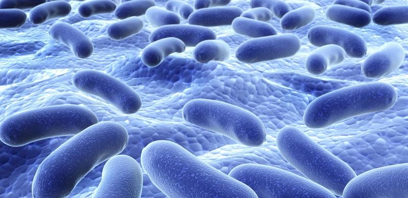 Como os Probióticos Podem Ajudar a Combater a Síndrome do Intestino Irritável