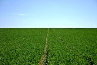 5+ Tanaman Pertanian yang Paling Menguntungkan