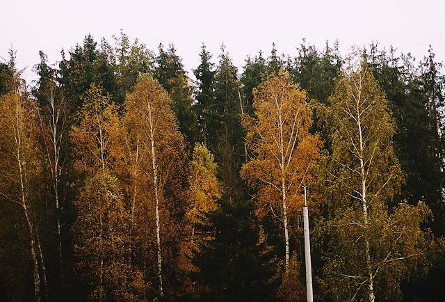 #11 Photography - Autumn views