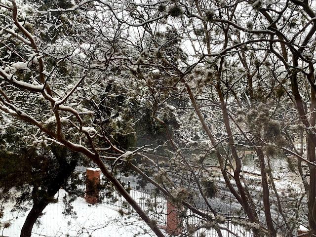 image of snow in Austin