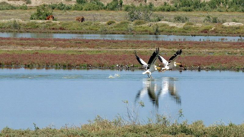 Τι αλλάζει στους Φορείς Διαχείρισης των προστατευόμενων περιοχών του Έβρου - Τι προβλέπεται για τη Σαμοθράκη