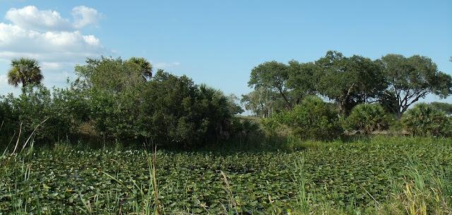 Plantas acuáticas en los canales