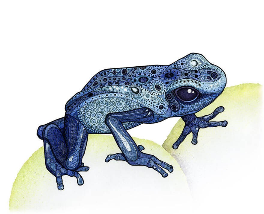 03-Poison-Dart-Frog-Z-H-Field-Distinctive-Animal-Drawings-and-Paintings-www-designstack-co