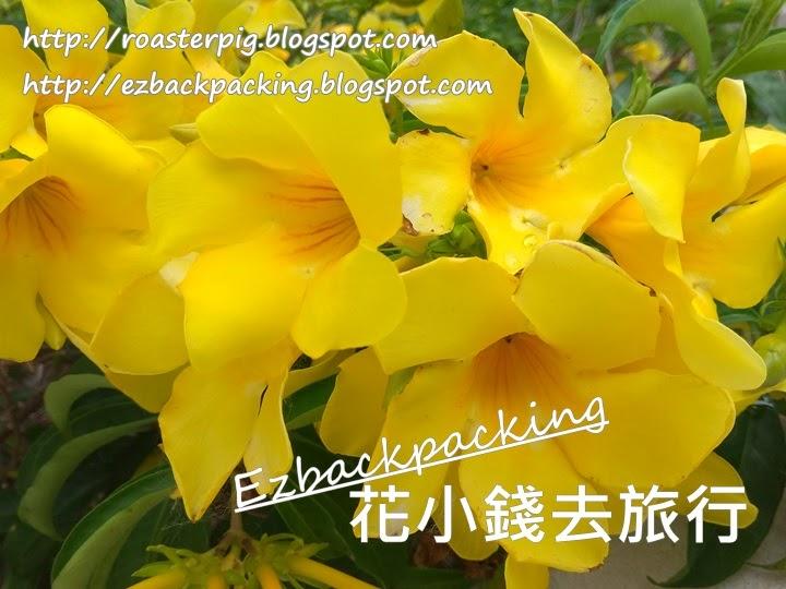 香港黃蟬花
