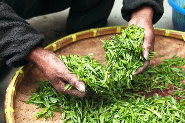 Tea process