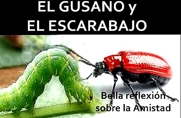 El Gusano y El Escarabajo - La Amistad