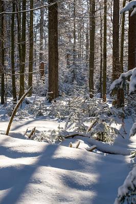 Rundweg Felswandergebiet  Wandern im Nationalpark Bayerischer Wald 08
