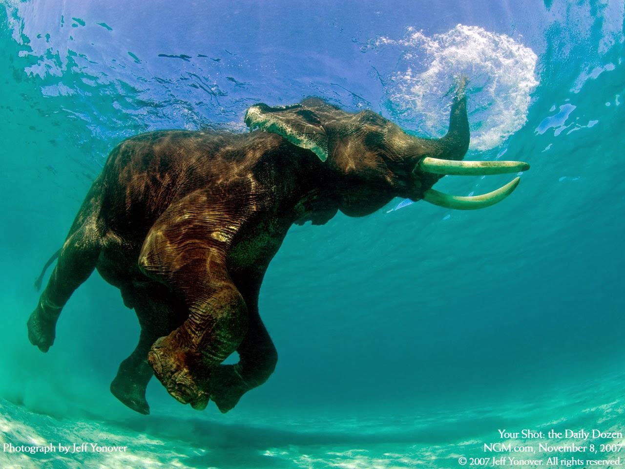 Animals Diving Underwater - Wallpapers HD - Tapandaola111