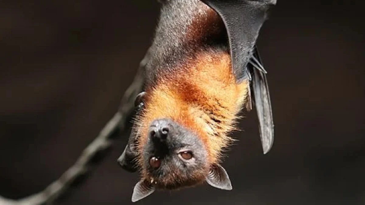 Now 24 new forms of corona virus found in Chinese bats