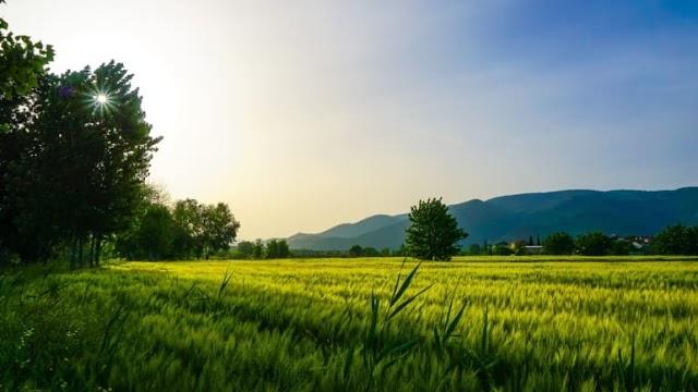 Doğa Bilimi Ekoloji Nedir?
