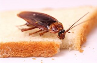 purpose of cockroaches in life