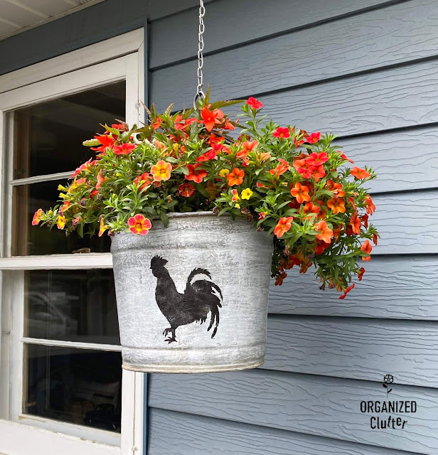 Photo of calibrachoa and a dragon wing begonia in a rooster stenciled bucket