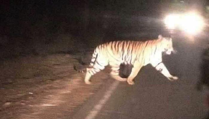 Kuno Palpur  Ntional Park, Madhya Pradesh, Ranthambhore National Park, tiger reserve of Rajasthan, Ranthambhore ka Sher,