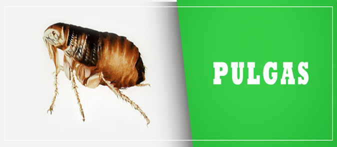 Dedetizadora de pulgas Pari Sp