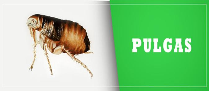 Dedetizadora de pulgas Rio Pequeno Sp