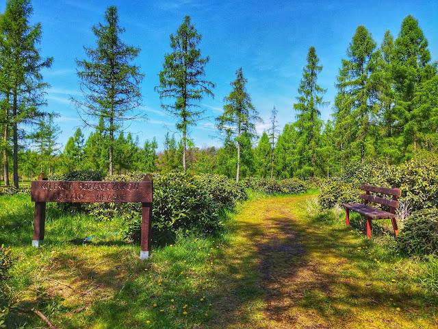 plac z rododendronem w Arboretum w Stradomii
