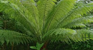 Gardeners World Ferns