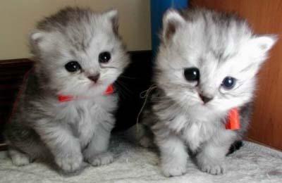 cats  download photos