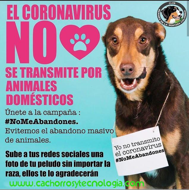 dog puppy NO transmite covid-19 Coronavirus cachorros tecnologia shurkonrad