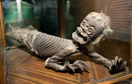 mumi putri duyung yang paling menyeramkan dan mengerikan di dunia-8