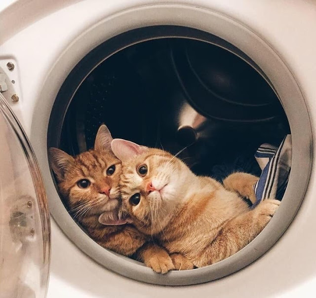 """10+ Cats Who Are So Purrfect That They Deserve The Title """"Kitten Of The Year"""""""