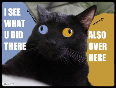 Photoshopped Cat picture • Cat with funny divergent strabismus. 'I see what you did there...' [ok-cats.com]